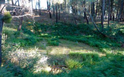 Respuesta al artículo de Luis Besa sobre la presa de Lastras